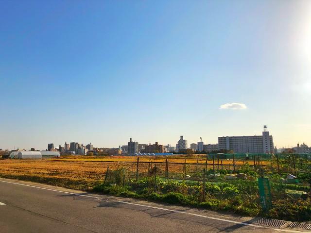 平針ランチ【農園レストラン suburbian(サバーヴィアン)】外に広がる田園風景2
