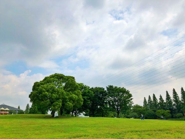 【とだがわこどもランド(戸田川緑地)】南地区芝生広場2