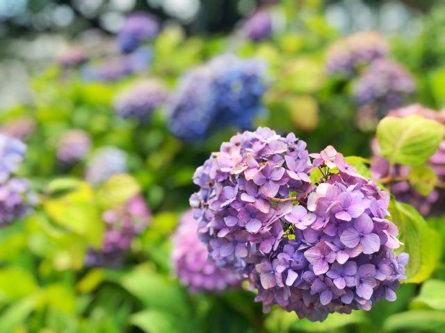 【とだがわこどもランド(戸田川緑地)】フラワーセンター 季節の花