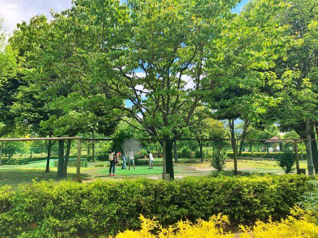 【とだがわ【戸田川緑地】パターゴルフ4